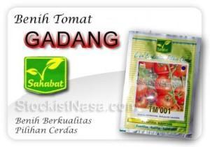 Benih Tomat